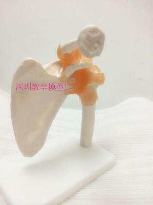 1Pcs Shoulder Joint Flexible Model w/ Ligaments Anatomical skeletal #A410 LW