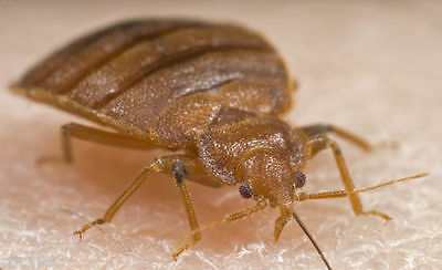Kritterkill 3 Stage Professional Bed Bug Killer Treatment For Home Use