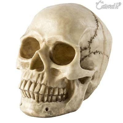 Halloween Decoration Props Human Skull Lifesize Replica Realistic Gothic Head UK