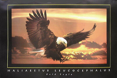 Bald Eagle Wildlife Motivational Poster Art Print School Classroom Vision MVP583