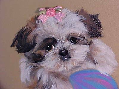 Shih Tzu Puppy Original Painting Closeout Sale