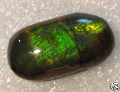 AMMOLITE MULTICOLOR  2,71 Ct. 17,0 X 13,0 MM B05-017