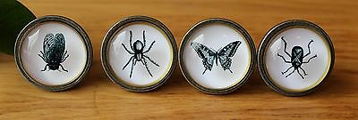 Nature Range Glass Drawer Knobs - Spider Fly Butterfly Beetle - Update Furniture