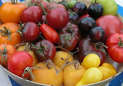 Heirloom Tomato Seeds (and more) : 2019 List : Choose from over 75 Varieties