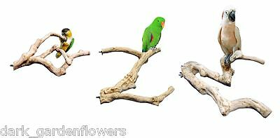 Parrot Perch Multi-branch Java Wood Cockatiels to Macaws