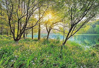 SPRING LAKE Photo Wallpaper Wall Mural GREEN FOREST NATURE National Geographic