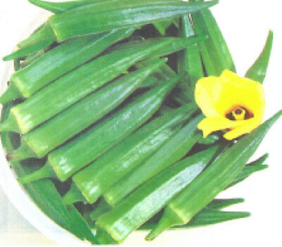 Indian Okra-Chanchal 50 Finest Seeds