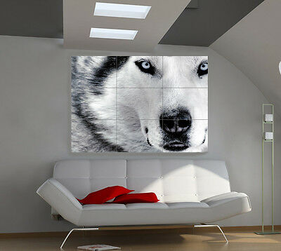 Beautiful Wolf large giant animals poster print photo mural wall art ia507