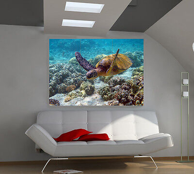 Turtle large giant animals poster print photo mural wall art ia552