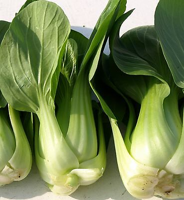 Canton Pak Choi- Heirloom Variety- 500+ Seeds- Chinese Cabbage- Bok Choy