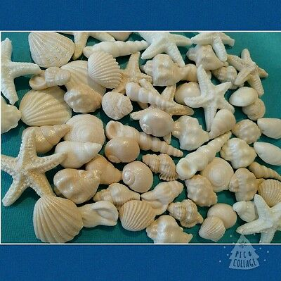 SEA SHELLS edible  shimmer Natural  cake cupcake toppers wedding  40x beige