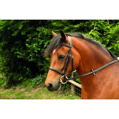 Windsor Leather Cavesson Snaffle Bridle & Reins - Pony, Cob, Full