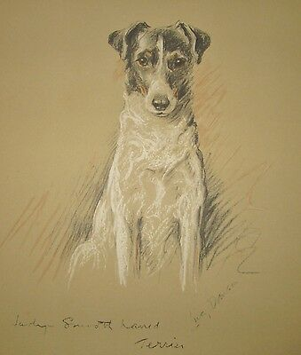 Lucy Dawson 1937 Vintage Print of a Smooth Haired Fox Terrier
