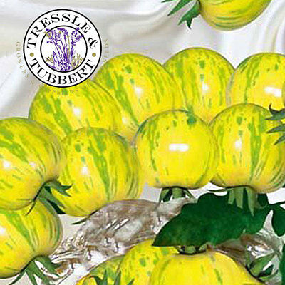 Rare Yellow and Green Striped Tomato - 20 seeds - UK SELLER