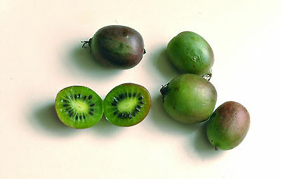 Hardy Kiwifruit Kiwi Berry Arctic Baby Grape Kiwi Actinidia Arguta Seeds 25 PCS