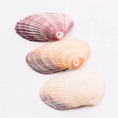 Scallop 50mm Natural Thai SEA SHELL Craft DIY Drilled Hole Bead Jewelry A1313