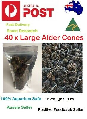 40 Black Alder Cones for Dwarf Shrimp Discus Cherry Shrimp Betta fish