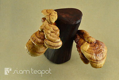 Natural Dry Mushroom Lingzhi Ganoderma Red Ironwood Decor Art Handmade OAK No6