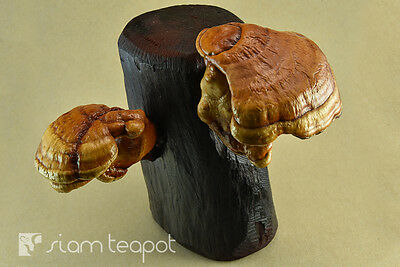 Natural Dry Mushroom Lingzhi Ganoderma Red Ironwood Decor Art Handmade OAK No7