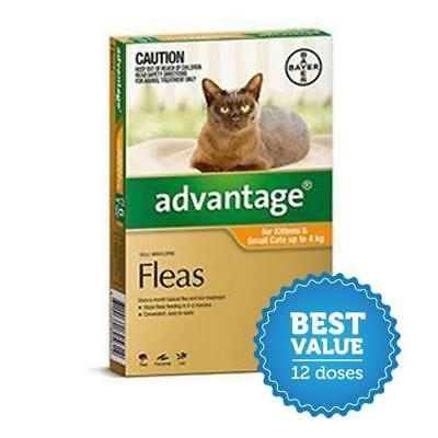 Advantage for Small Cats to 4kg 12 Pack for fleas