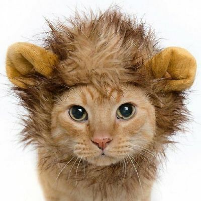 Cat Lion Mane Wig For Pet Dress Up Costume Fancy Dress Novelty Item With Ears