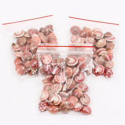 Lot of Mini 12mm Red Tone Button Top Thai SEA SHELL Craft DIY Decorate Kit A1343