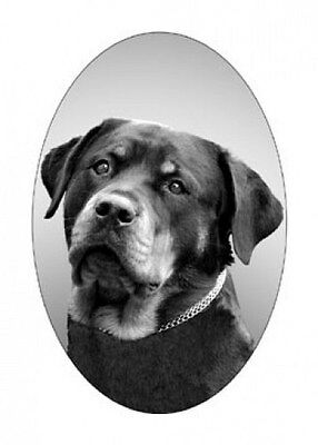 4X6 ROTTWEILER dog static cling glass window decal