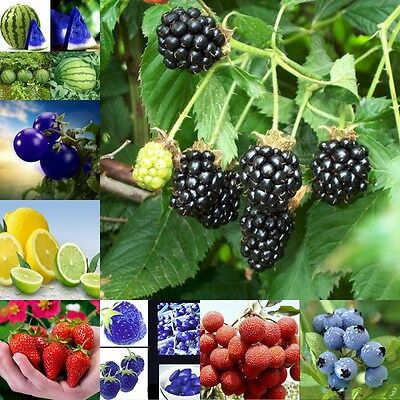 Seeds Delicious Fruit Vegetables Plants Seed Home Garden Wholesales