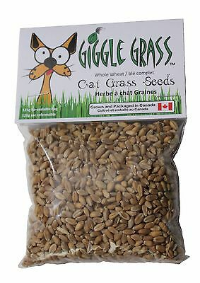 Giggle Grass Whole Wheat Grass Seeds 100% Organic Cat Grass **made In Canada*