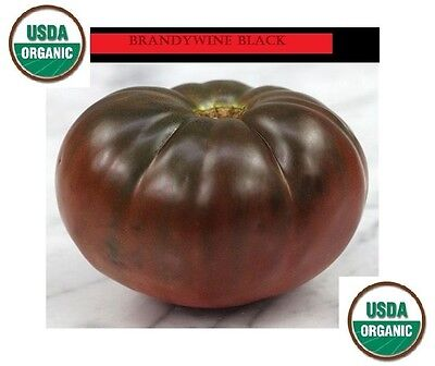 30 Seeds ORGANIC Brandywine Black Tomato Heirloom Rare Non-GMO Super Slicing!