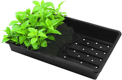 N259 Bosmere Rigid Seed Tray With Holes Gravel Tray Black