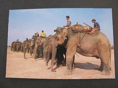 Elephant round up at Surin Province North East Thailand