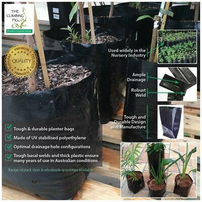 0.5 L (500ml) Premium black poly, Planter Bags. Range of pack sizes. Best price.