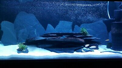 20kg NATURAL BLACK SLATE SET OF STONES FOR AN AQUARIUM VIVARIUM ROCK MALAWI