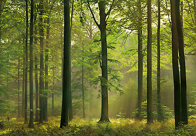 "Large wall mural wallpaper 366x254cm (12' x 8'4"")  Forest - green trees"