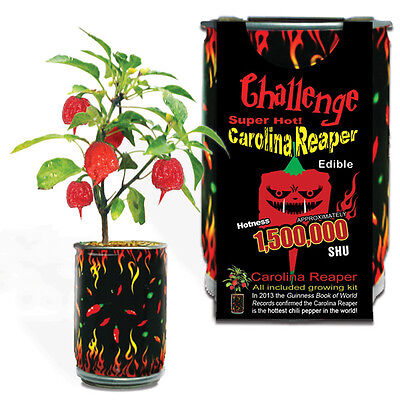 Carolina Reaper Seeds All Included In Growing Kit Grow Carolina Reaper Pepper