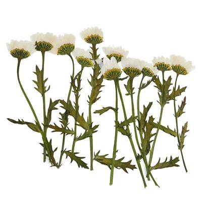 12 Natural Dried Flower Pressed Plant For Necklace Jewelry Making DIY Crafts