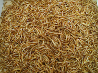 5kg Dried Mealworms, Wild Bird food/seed, Mealworms, Pets. !!Grade One Quality!!