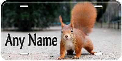 Squirrel Aluminum Any Name Personalized Car Auto Tag Novelty License Plate