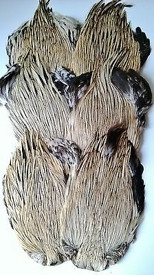 Badger Cock cape, Grade AAA, Fly tying materials