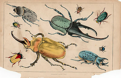 2x ORIGINAL ANTIQUE PRINT Goldsmith Fullarton BEETLES BUTTERFLIES c1850