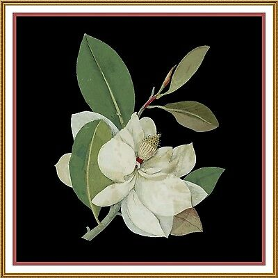 Magnolia Flower by Mary Delany Counted Cross Stitch Pattern. Shipping is Free