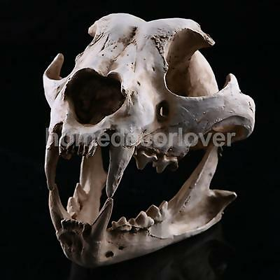 Realistic Jackal Skull Resin Replica Skeleton Model Aquarium Decor UK