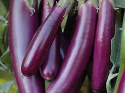 Eggplant Italian Long Purple (30 Seeds)