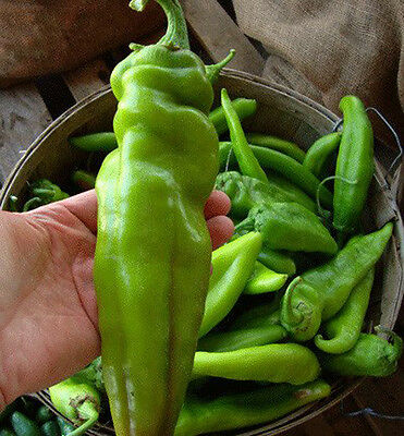 Numex Big Jim - Hot Chilli Pepper Up To 30 Cm Long, 100 High Quality Seeds