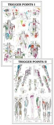 Two Part Trigger Point Chart Set