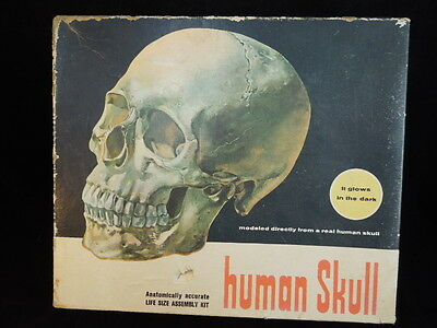 VINATGE Glow in the dark HUMAN SKULL Assembly Kit with stand and instructions