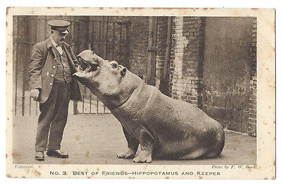 HIPPOPOTAMUS and Keeper, Best of Friends, Postally Used Postcard 1925
