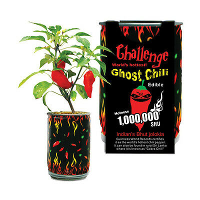 Super Hot Ghost Chilli Pepper In A Can Bhut Jolokia Plant Easy Grow DIY Fun Gift