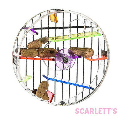 Large Acrylic Foraging Wheel, Parrot & Bird Puzzle Foraging Stimulating Toy